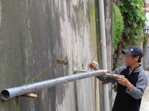 Đăt bẫy keo dính chuột ở 1 bờ tường