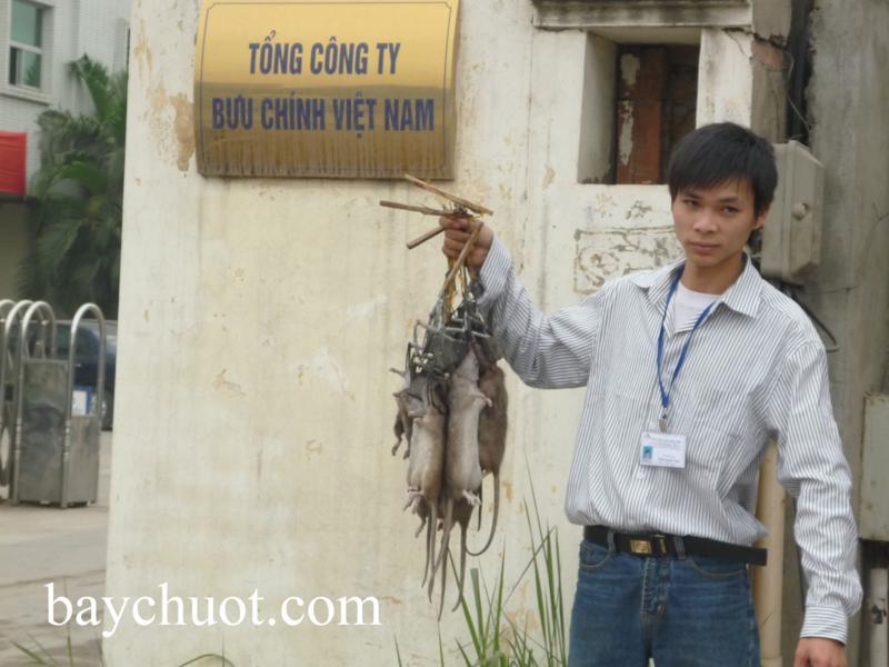 diệt chuột chuyên nghiệp